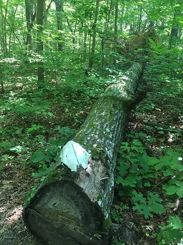 Skull on a log