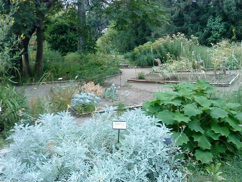 le jardin des plantes de montpellier france the herb gard mgs northern ca branch flickr. Black Bedroom Furniture Sets. Home Design Ideas