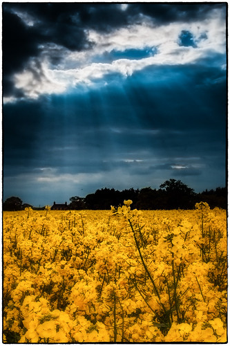 Norfolk Landscape (Halo) | by Steven Docwra