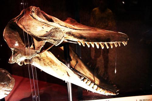 Orca Natural History