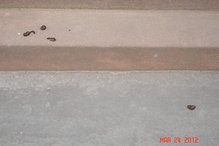 Dog Feces on my stoop! | by IronCurtaiNYC