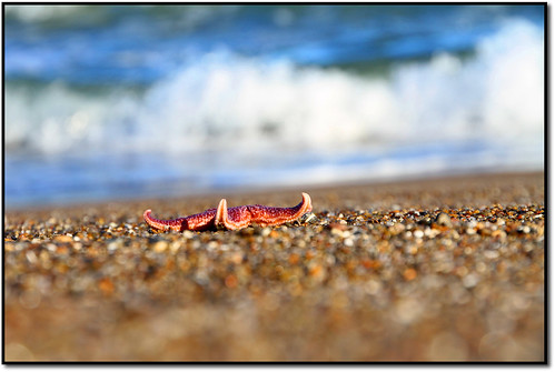 Starfish. | by Michael.P.Riis