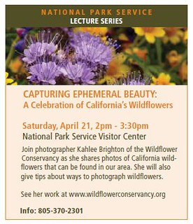 Tomorrow's Wildflower Photography Presentation for the National Park Service | by Kahlee Spiritdancing