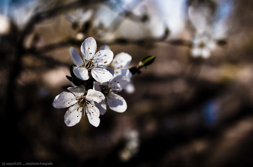 the spring has arrived ... | by jens.oertel
