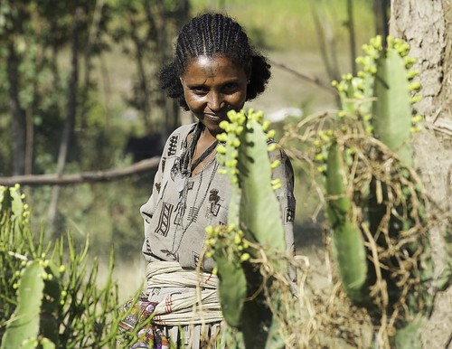 Woman cactus. Ethiopia | by courregesg