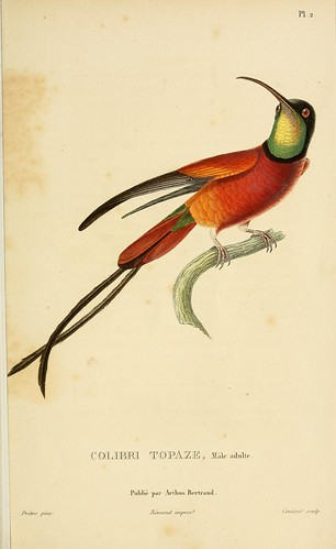 n38_w1150 | by BioDivLibrary