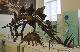 Stegosaurus, American Museum of Natural History | by InSapphoWeTrust