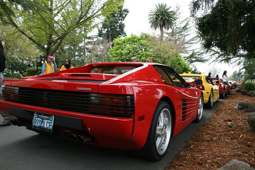 Testarossa | by drbeasleys.com
