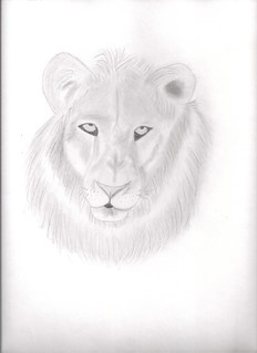 Lion Drawing | by cheyenne 1