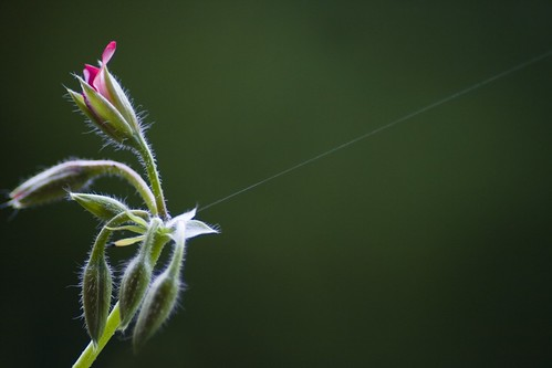 held by a thread | by Manja Photography :: : . . .