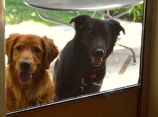 "Let us in, so we can go back out again! =============== [Daily Dog Challenge -""Repeating Pattern""] -- Oh ya…these guys are really good repeating the pattern of asking to go out when they are in, and asking to come in, when they are out…. 