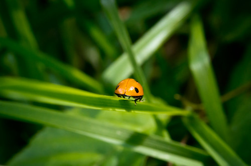 little red guy on his way into the green | by Schub@