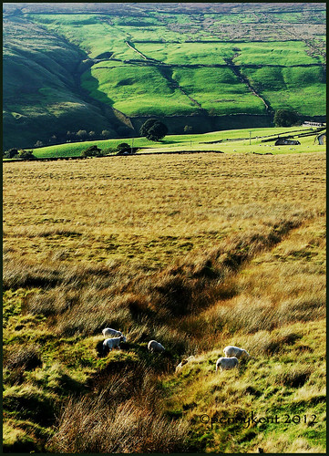 Hebden Moor | by radish5 returns