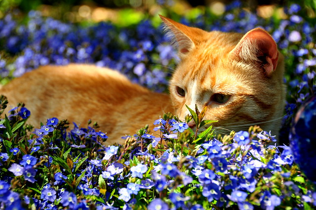 Cat Photos - Spring kitty