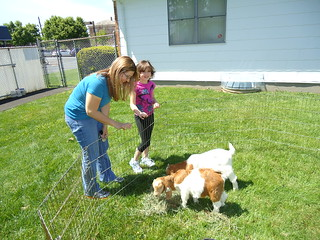 Meet the Farm Animals @ LML | by lindenhurst memorial library ny