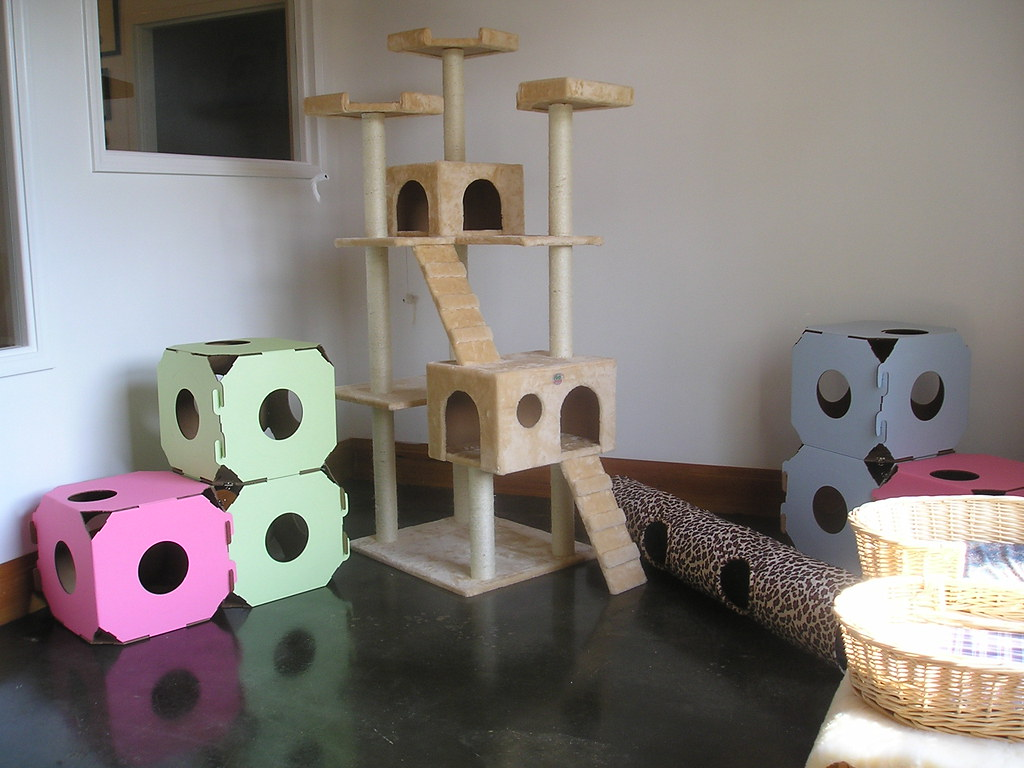 The Value of Pet Playroom Structures - Direct Animal