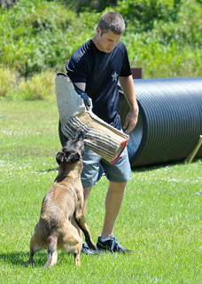 8957: K9 Training in Action | by NationalSheriff
