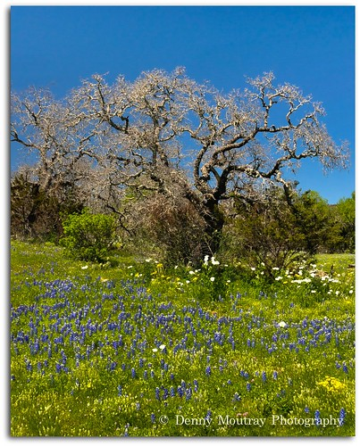 Spring Day In The Hill Country. | by DMoutray - Denny Moutray Photography