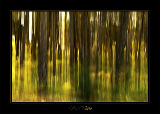 Bosc abstracte / bosque abstracto / abstract forest | by SergioR&P