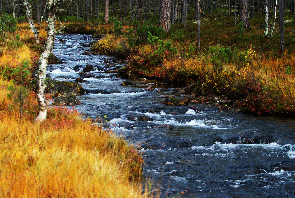 An Autumn River Scene Urho Kekkonen National Park Finnish Flickr