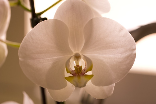 My new orchids | by Aldehuela