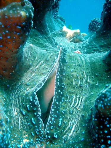 Giant Clam | by raymonddy