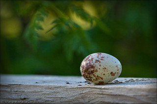 a quail's egg sitting on a fence | by Margret Maria Cordts