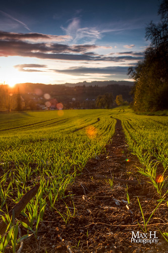 The Field HDR | by Max Habich