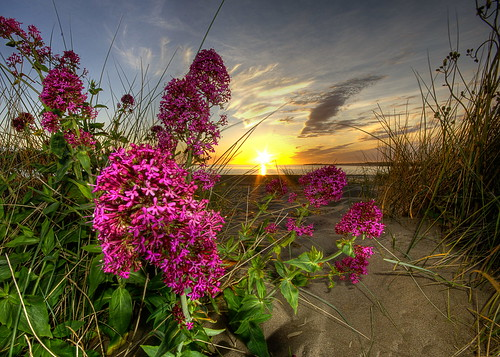 Instow Sunset. Valarian Plant | by Nick Woodrow: Thanks for all of your comments