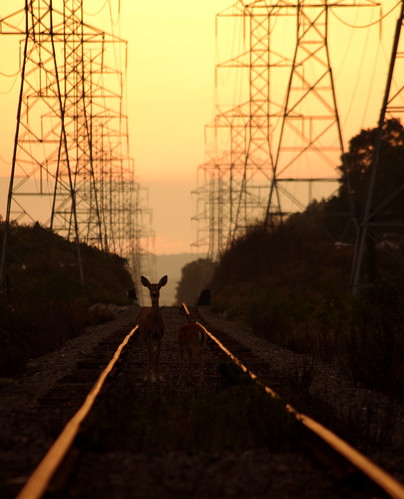 deer on the tracks | by Hopefoote, Ambassador of the Wow
