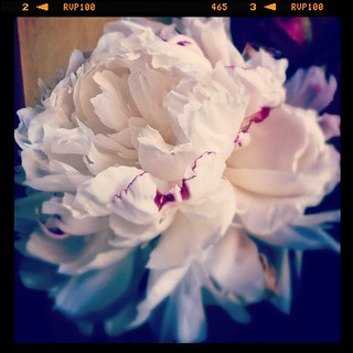 My favorite season is peony season. | by heylucy