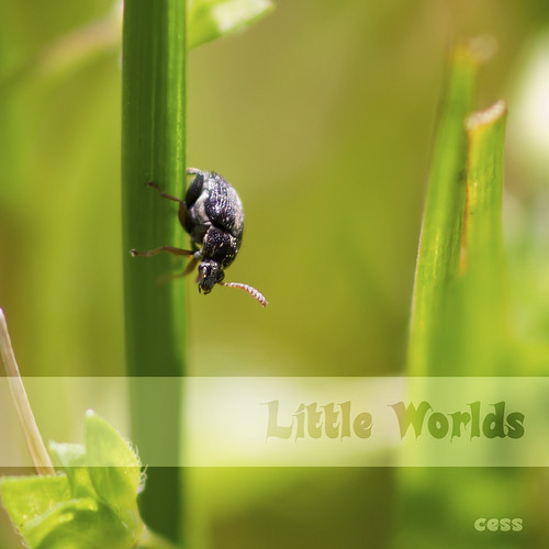 Little worlds -  go down | by ~Cess~