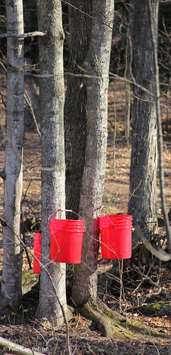 Red Pails ~ Maple Syrup Time in Michigan | by Trish P. - K1000 Gal