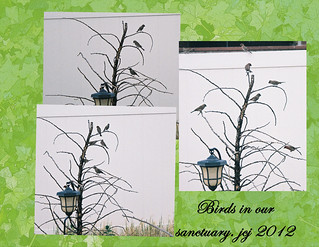 BIRDS IN OUR SANCTUARY | by fantartsy JJ *2013 year of LOVE!*