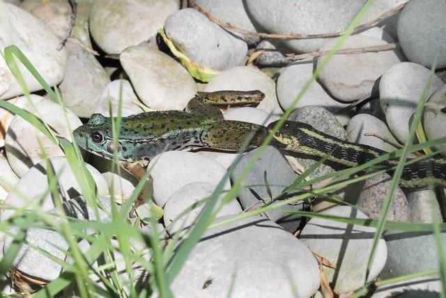 Frog and Snake 2