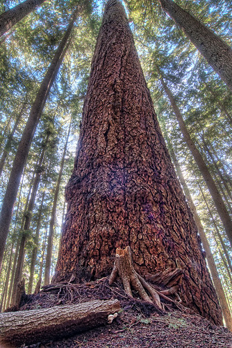 Massive Tree | by `James Wheeler