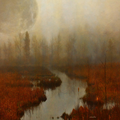 ... moon in the marsh ... | by xandram