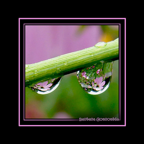 A World in a Raindrop | by plumnutz