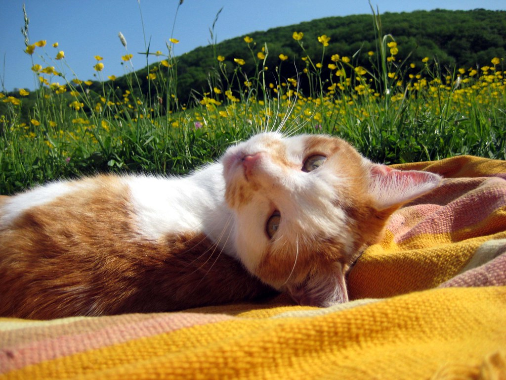 Cat Breeds | 10 Hot Tips to Keep Your Cats Cool This Summer