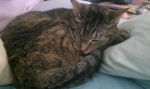 Maggie curled up and purring next to Jeni | by jenianddean