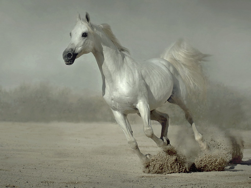 White Running Horse Wallpaper For Desktop Cristina C1 Flickr