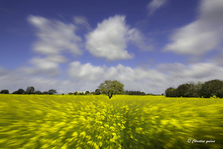 Rapeseed Field | by Quémac