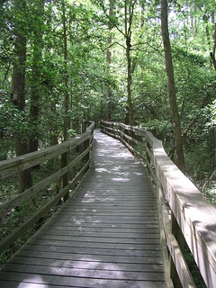 Congaree NP, SC | by bvermette