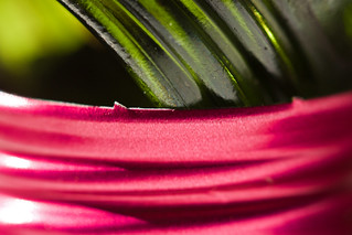 Pink and Green | by Dikke Biggie.