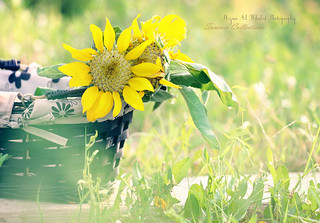 summer collection | by mzna al.khaled