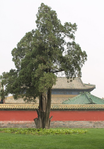 Outside of Temple  of Heaven - Beijing (China) | by Esther Spektor - Thanks for 12+millions views..