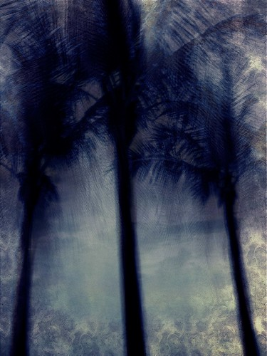 The darker palms. | by Andy Royston / Ft Lauderdale Sun