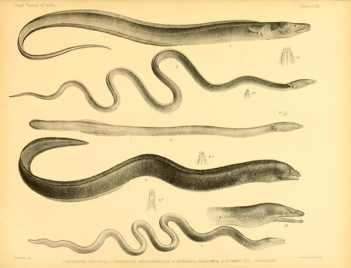 n356_w1150 | by BioDivLibrary