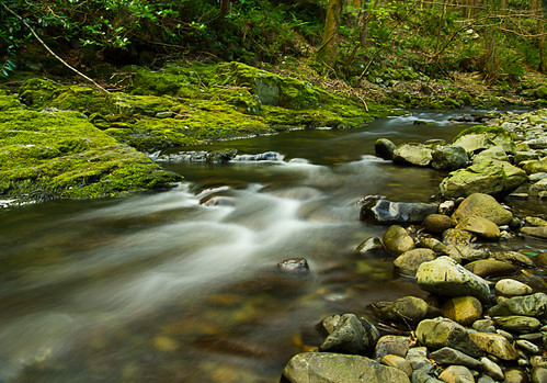 Flow on the Shimna River, Tollymore | by cranneyanthony