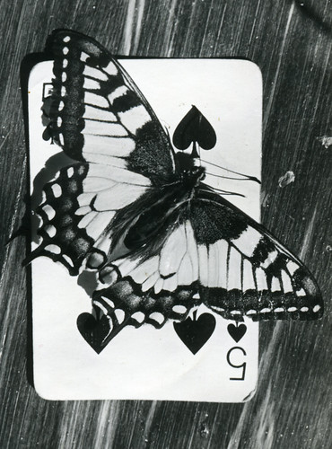 Swallowtail  --Papilio machaon --  on a playing card | by Stein Rui , Manum